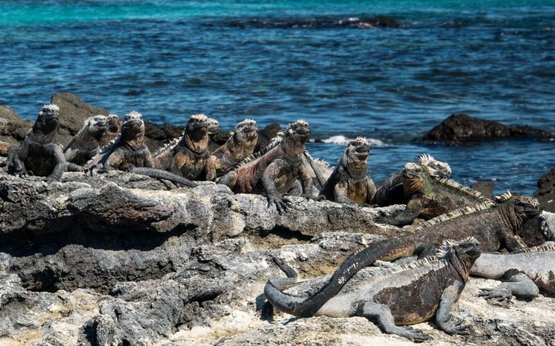 The Galapagos Islands...Darwin s Rare Wonder 3ccfad57fdb