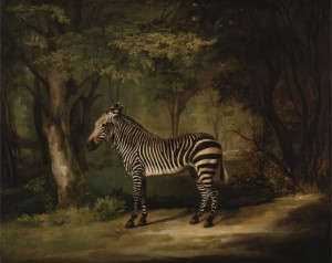 Zebra, c.1763, Oil on Canvas