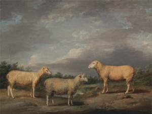 Ryelands Sheep, the King's Ram, the King's Ewe and Lord Somerville's, c.1807, Oil on Panel