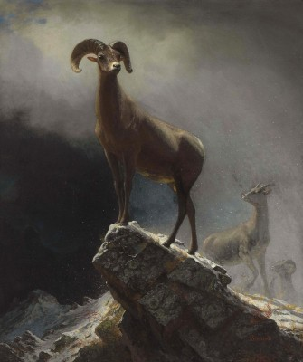 Big Horn Sheep, c.1881, Oil on Canvas