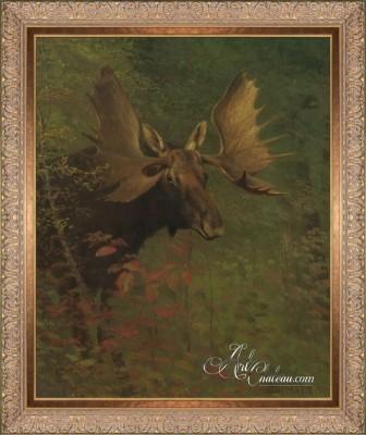 American Moose Study, after Albert Bierstadt
