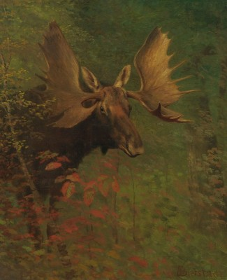 Moose Study, c.1881, Oil on Canvas