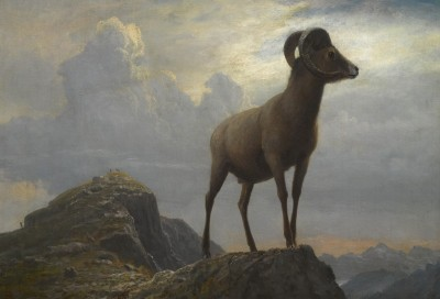Bighorn Ram, c.1881, Oil on Canvas