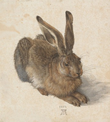 Black Forest Hare, c.1502, Pen and Brown Ink and Body Color