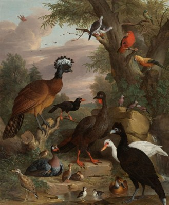 An Assembly of Birds in a Parkland, c.1704, Oil on Canvas