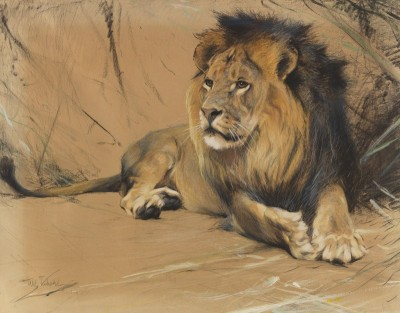 Lion, King of the Savannah, c.1922, Pastel on Parchment
