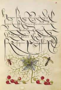 Spider, Love-in-a-Mist, Potter Wasp, Red Currant, c.1562, Watercolors, gold, silver paint, and ink
